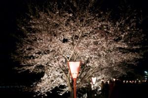 sakura_rightup