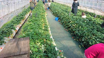 吉村農園バリアフリー